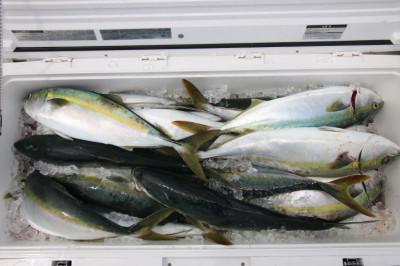 西岡遊漁の2020年6月12日(金)2枚目の写真