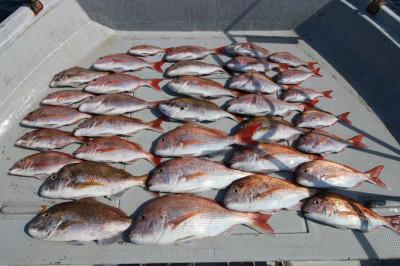 西岡遊漁の2020年6月16日(火)5枚目の写真