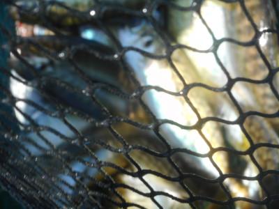 由良海つり公園&釣堀ランドの2020年6月22日(月)2枚目の写真