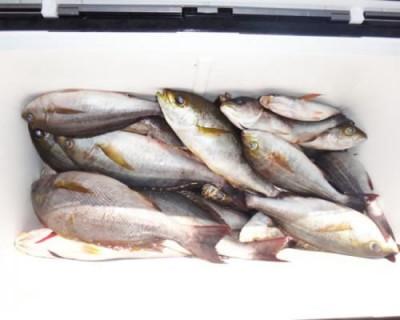丸銀釣りセンターの2020年6月24日(水)2枚目の写真