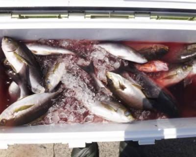 丸銀釣りセンターの2020年6月24日(水)3枚目の写真