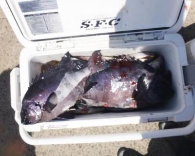 丸銀釣りセンターの2020年6月24日(水)4枚目の写真