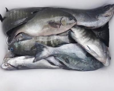 丸銀釣りセンターの2020年6月24日(水)5枚目の写真