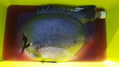 乙島丸の2020年6月19日(金)3枚目の写真