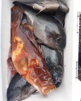 丸銀釣りセンターの2020年6月27日(土)2枚目の写真