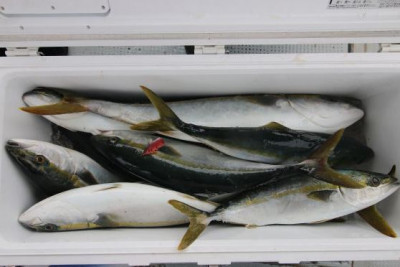 西岡遊漁の2020年6月19日(金)5枚目の写真