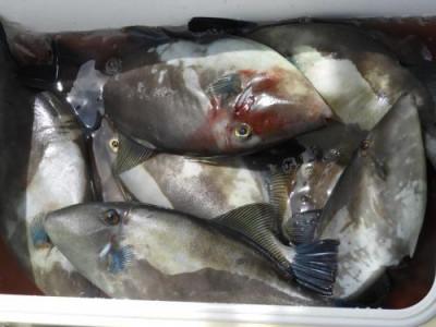 釣具の海友の2020年6月28日(日)5枚目の写真
