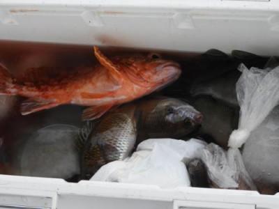 釣具の海友の2020年7月14日(火)4枚目の写真