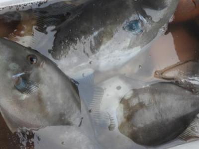 釣具の海友の2020年7月14日(火)5枚目の写真