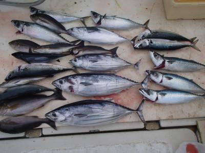 オーシャン串本の2020年7月15日(水)1枚目の写真