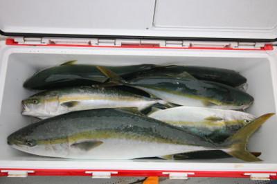 西岡遊漁の2020年7月22日(水)5枚目の写真