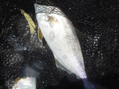 由良海つり公園&釣堀ランドの2020年7月29日(水)2枚目の写真