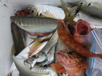 釣具の海友の2020年7月19日(日)2枚目の写真