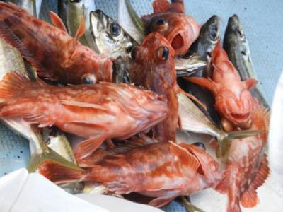釣具の海友の2020年7月25日(土)1枚目の写真