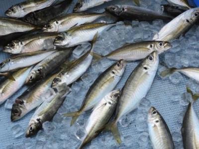 釣具の海友の2020年7月27日(月)3枚目の写真
