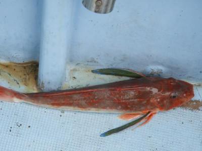釣具の海友の2020年7月27日(月)5枚目の写真