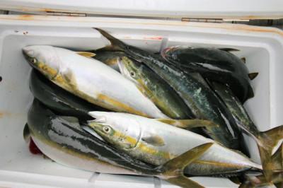 西岡遊漁の2020年7月24日(金)4枚目の写真