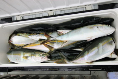 西岡遊漁の2020年7月24日(金)5枚目の写真