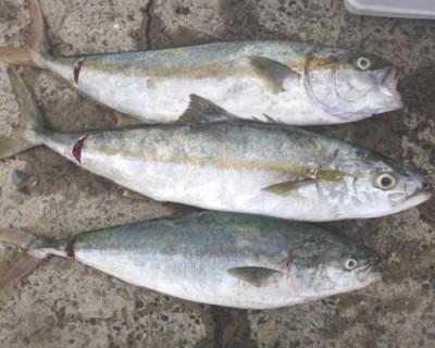 丸銀釣りセンターの2020年7月23日(木)4枚目の写真