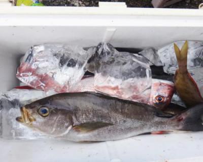 丸銀釣りセンターの2020年7月26日(日)5枚目の写真