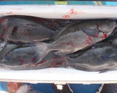 丸銀釣りセンターの2020年7月29日(水)3枚目の写真