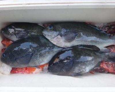 丸銀釣りセンターの2020年7月29日(水)4枚目の写真