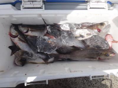 丸銀釣りセンターの2020年7月31日(金)3枚目の写真