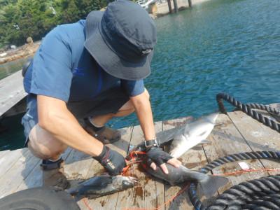 由良海つり公園&釣堀ランドの2020年8月22日(土)2枚目の写真