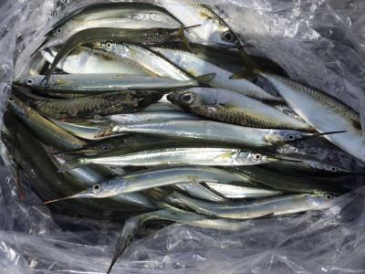 尼崎市立魚つり公園の2020年8月28日(金)3枚目の写真