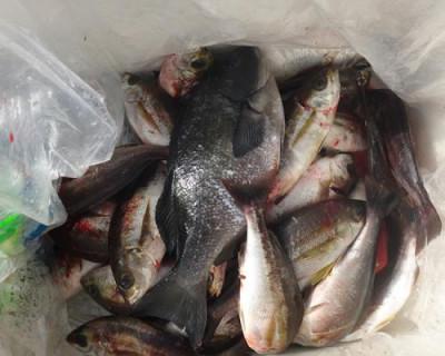 丸銀釣りセンターの2020年8月15日(土)3枚目の写真