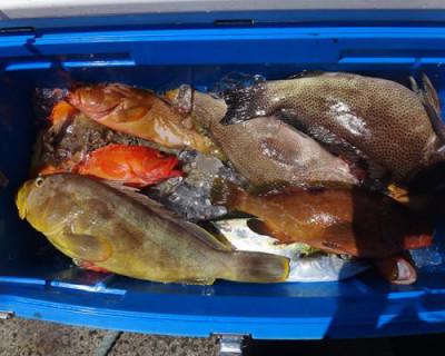 丸銀釣りセンターの2020年8月17日(月)4枚目の写真