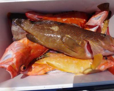 丸銀釣りセンターの2020年8月17日(月)5枚目の写真