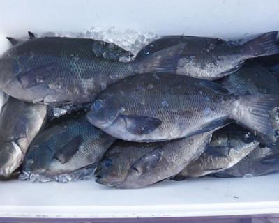 丸銀釣りセンターの2020年8月18日(火)2枚目の写真