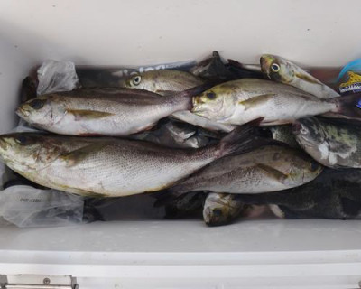 丸銀釣りセンターの2020年8月22日(土)4枚目の写真