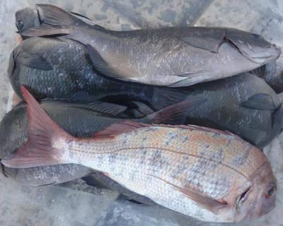 丸銀釣りセンターの2020年8月30日(日)4枚目の写真