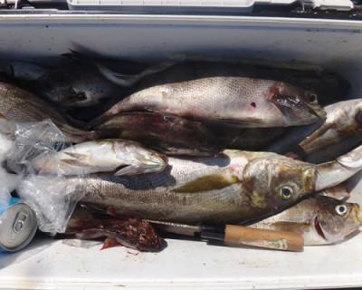 丸銀釣りセンターの2020年8月30日(日)5枚目の写真