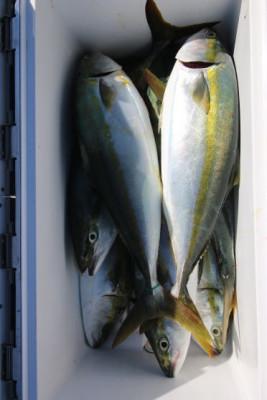 西岡遊漁の2020年8月14日(金)5枚目の写真