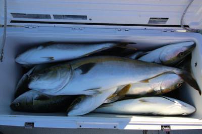 西岡遊漁の2020年8月16日(日)5枚目の写真