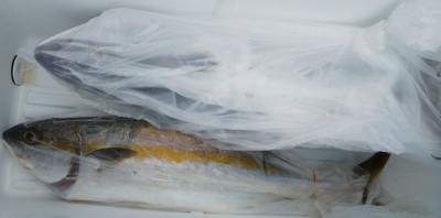 はまさか渡船の2020年9月9日(水)3枚目の写真