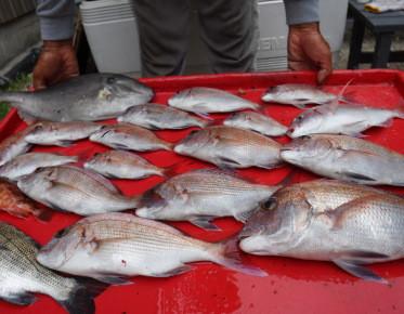 奥村釣船の2020年9月18日(金)4枚目の写真