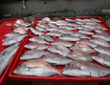 奥村釣船の2020年9月18日(金)5枚目の写真
