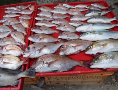 奥村釣船の2020年9月19日(土)5枚目の写真