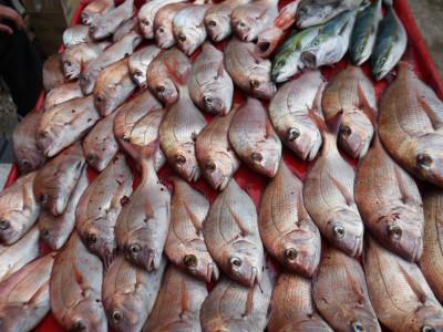 奥村釣船の2020年9月23日(水)5枚目の写真