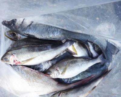 丸銀釣りセンターの2020年9月25日(金)4枚目の写真