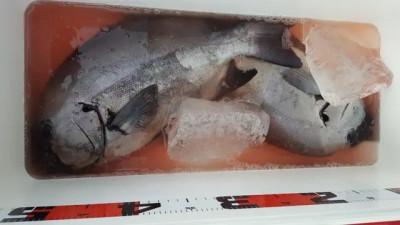 乙島丸の2020年9月23日(水)5枚目の写真
