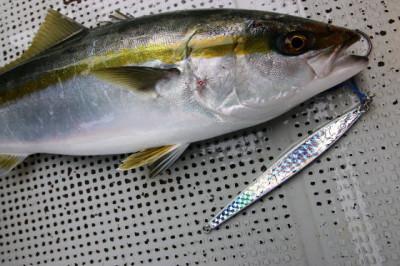 西岡遊漁の2020年9月16日(水)5枚目の写真