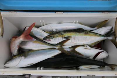 西岡遊漁の2020年9月20日(日)5枚目の写真