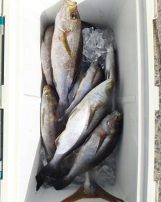 丸銀釣りセンターの2020年9月26日(土)3枚目の写真