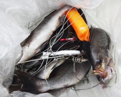 丸銀釣りセンターの2020年9月26日(土)4枚目の写真