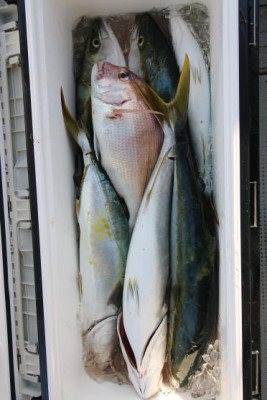 西岡遊漁の2020年9月28日(月)3枚目の写真